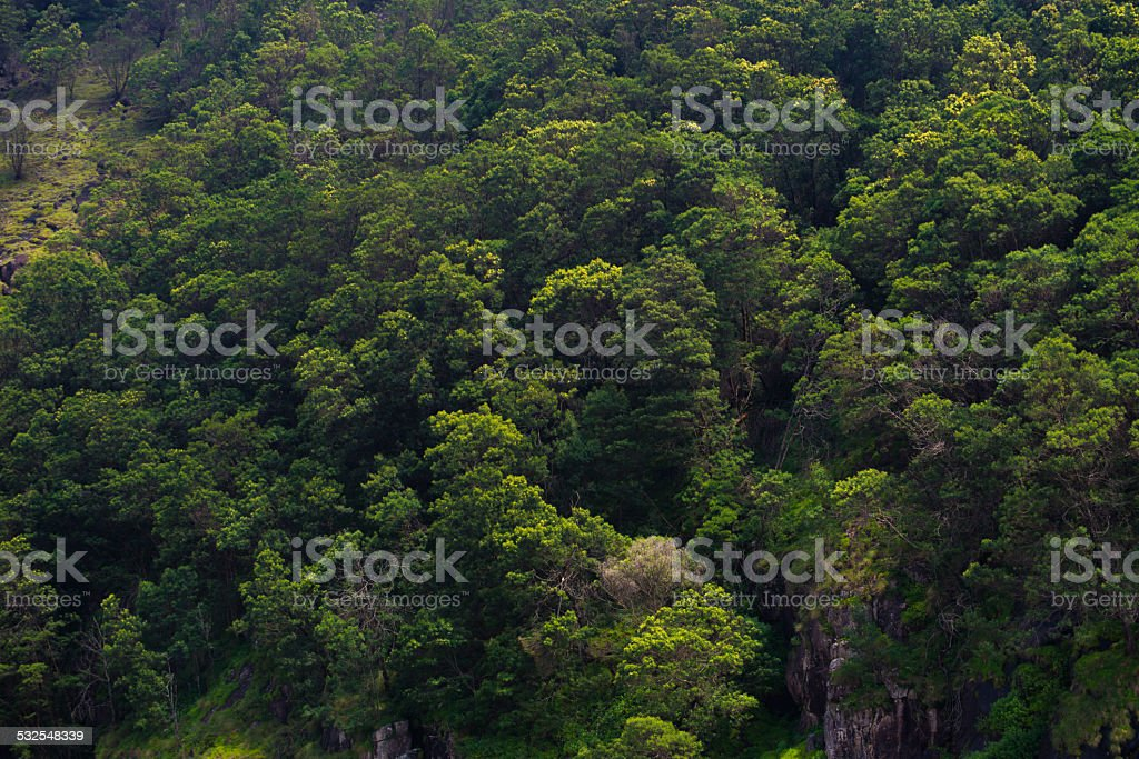 Dense forest top view stock photo