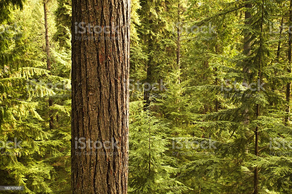 Dense forest woods stock photo