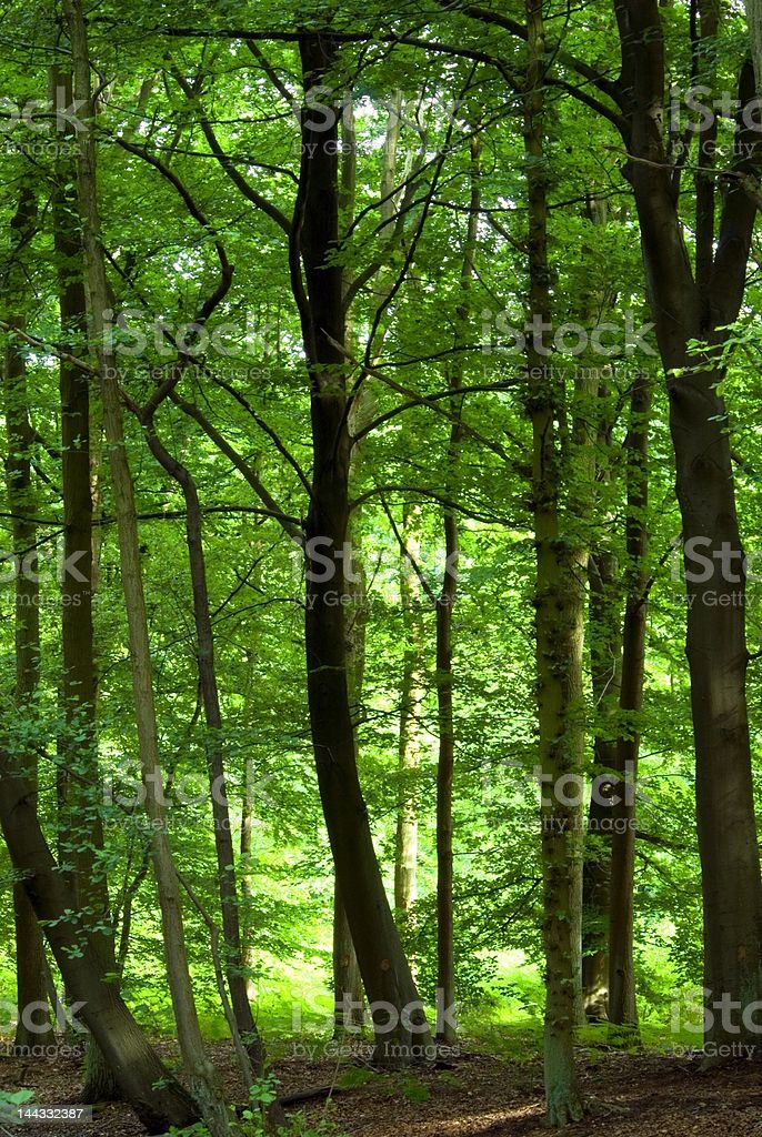 dense green forest royalty-free stock photo