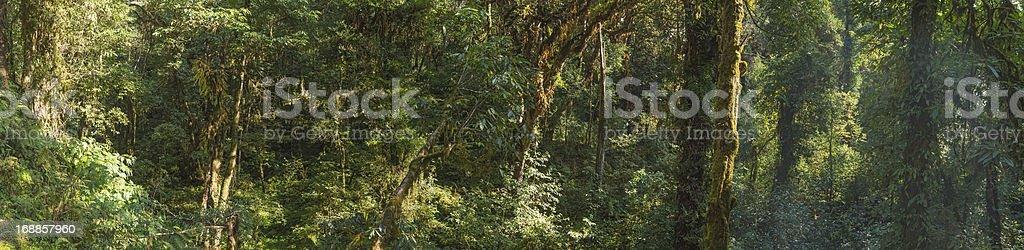 Dense jungle foliage lush green forest wilderness panorama stock photo