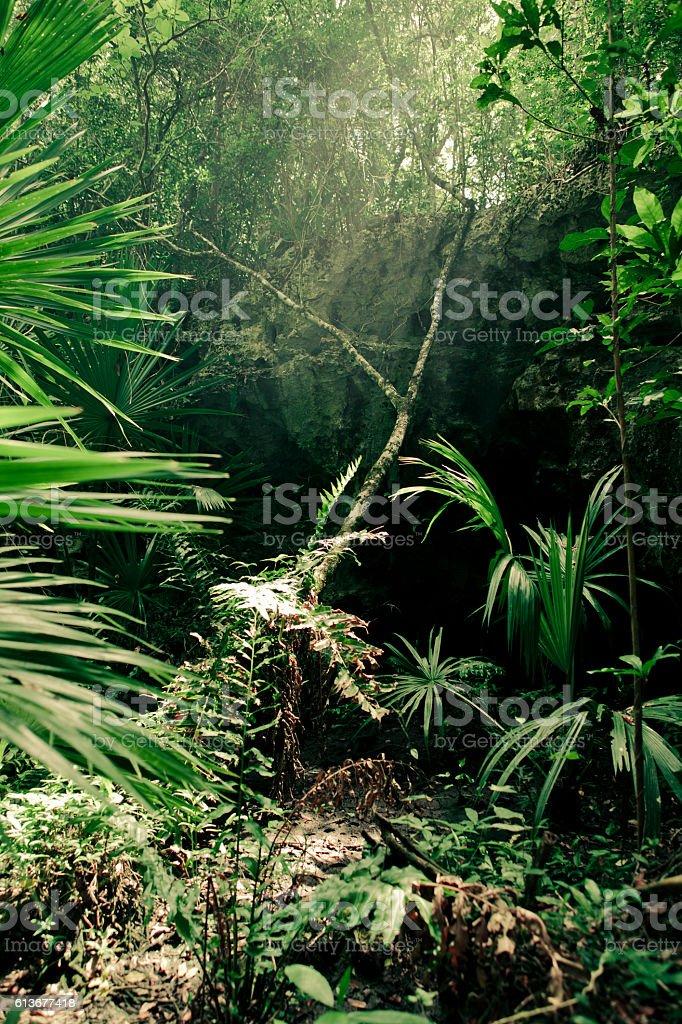 Dense jungle in Yucatan stock photo