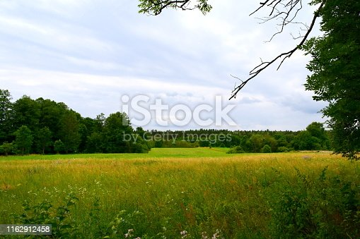 Dense pastureland, field, or meadow covered completely with grass and yellow flowers with a dense patches of forest or moor visible in the background below a cloudy cold summer sky on Polish plains