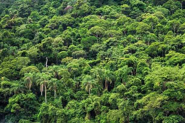 Dense Tropical Rainforest in Brazil stock photo