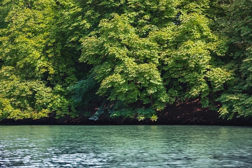 Dense vegetation with branches of trees grazing the water surface on the Saone riverbanks near Lyon French city