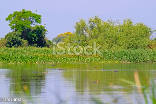 istock Densely forested shores of the Cuiaba river in the brazilian Pantanal, Porto Jofre, Mato Grosso Do Sul, Brazil 1129119237