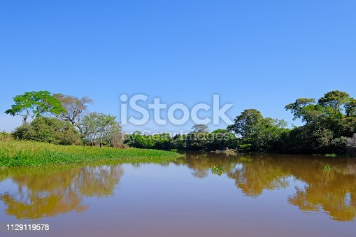 istock Densely forested shores of the Cuiaba river in the brazilian Pantanal, Porto Jofre, Mato Grosso Do Sul, Brazil 1129119578