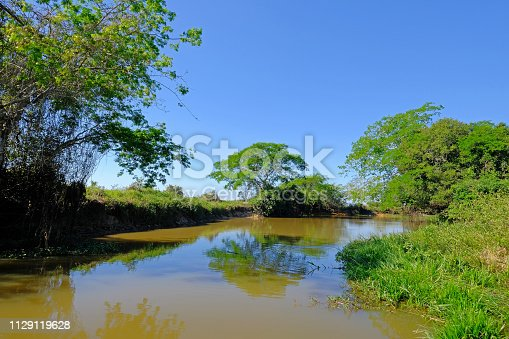 istock Densely forested shores of the Cuiaba river in the brazilian Pantanal, Porto Jofre, Mato Grosso Do Sul, Brazil 1129119628