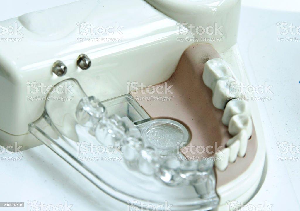 Dental artificial teeth stock photo