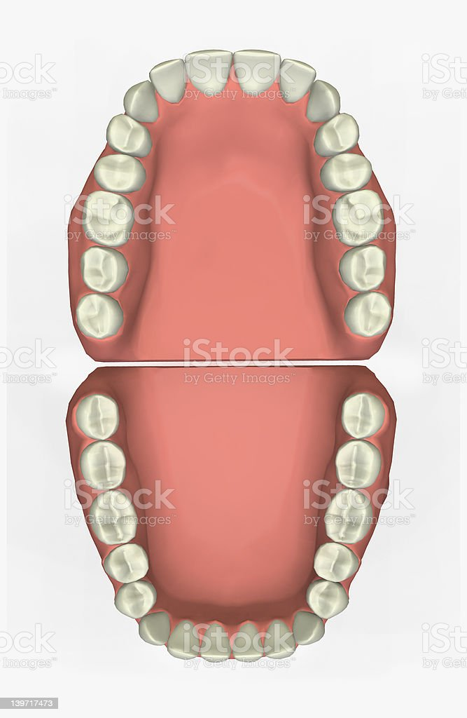 3D Dental Chart royalty-free stock photo