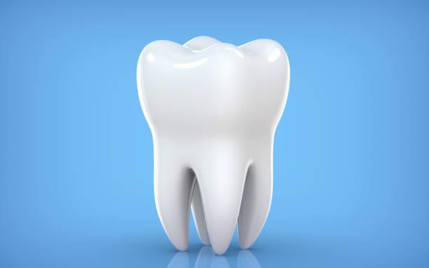 dental-modell von prämolaren zahn, 3d-rendering auf blauem backgroun. 3d-illustration als konzept der zahnuntersuchung zähne, zahngesundheit und hygiene. - menschlicher zahn stock-fotos und bilder