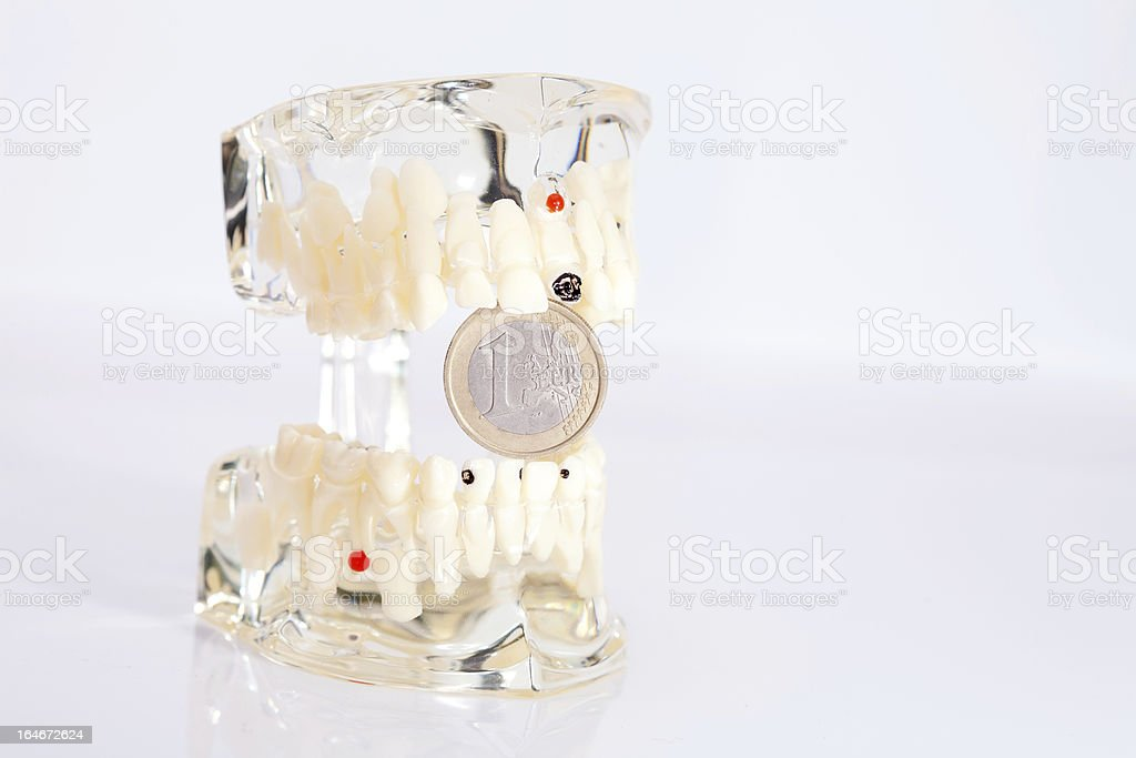 Dental model stock photo