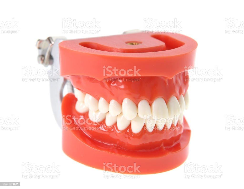 Fotografía de Modelo De Dientes Dentales Sobre Fondo Blanco y más ...