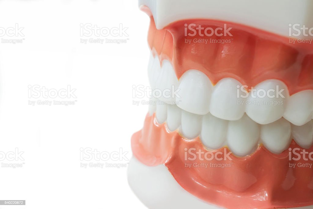 Dental teeth model on white background with clipping path stock photo