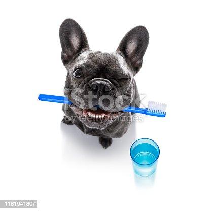 istock dental toothbrush dog 1161941807