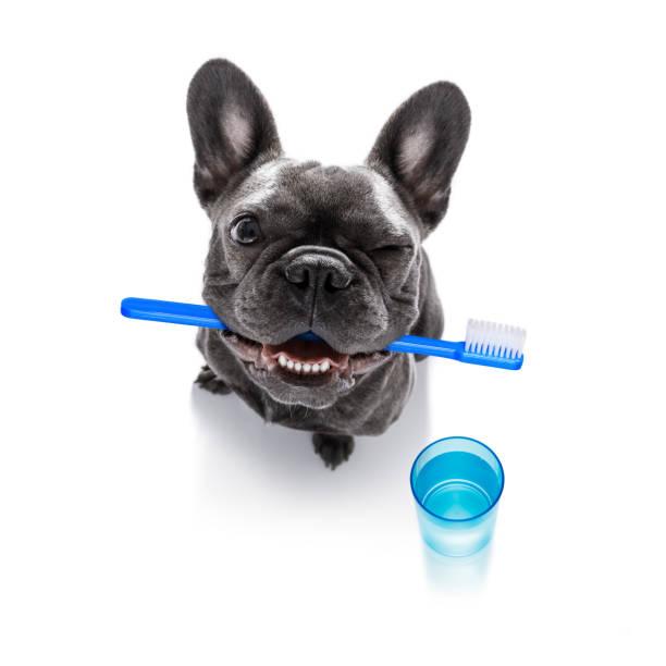 Zahnzahnbürste Hund – Foto