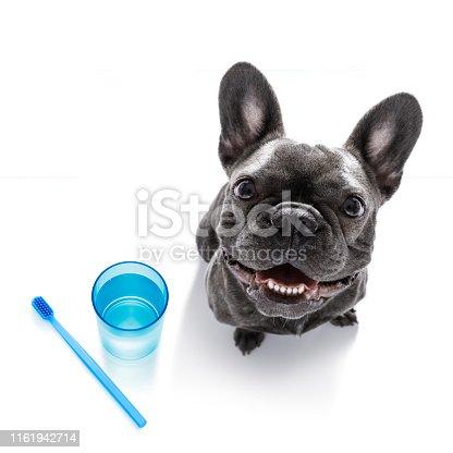 istock dental toothbrush dog 1161942714