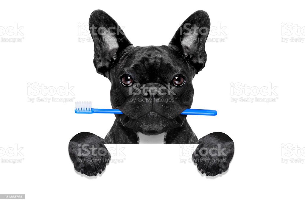 dental toothbrush dog stock photo