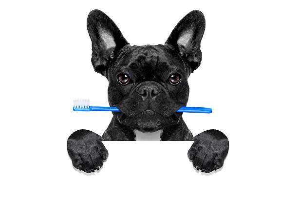 dentaire brosse à dents de chien - dents des animaux photos et images de collection