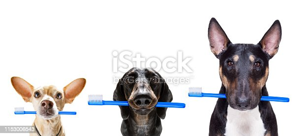 istock dental toothbrush  row of dogs 1153006543