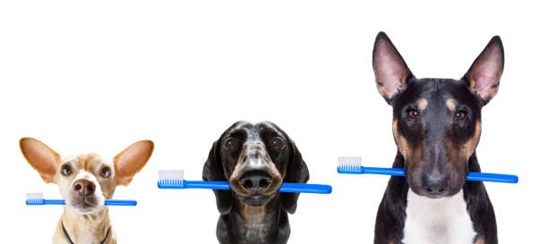 Zahnbürste Reihe von Hunden – Foto