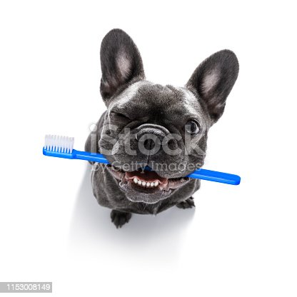istock dental toothbrush  row of dogs 1153008149