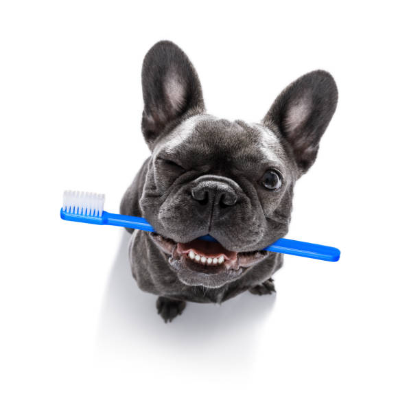 dental toothbrush  row of dogs stock photo