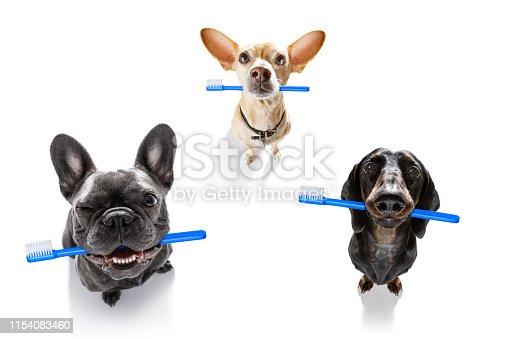 istock dental toothbrush  row of dogs 1154083460