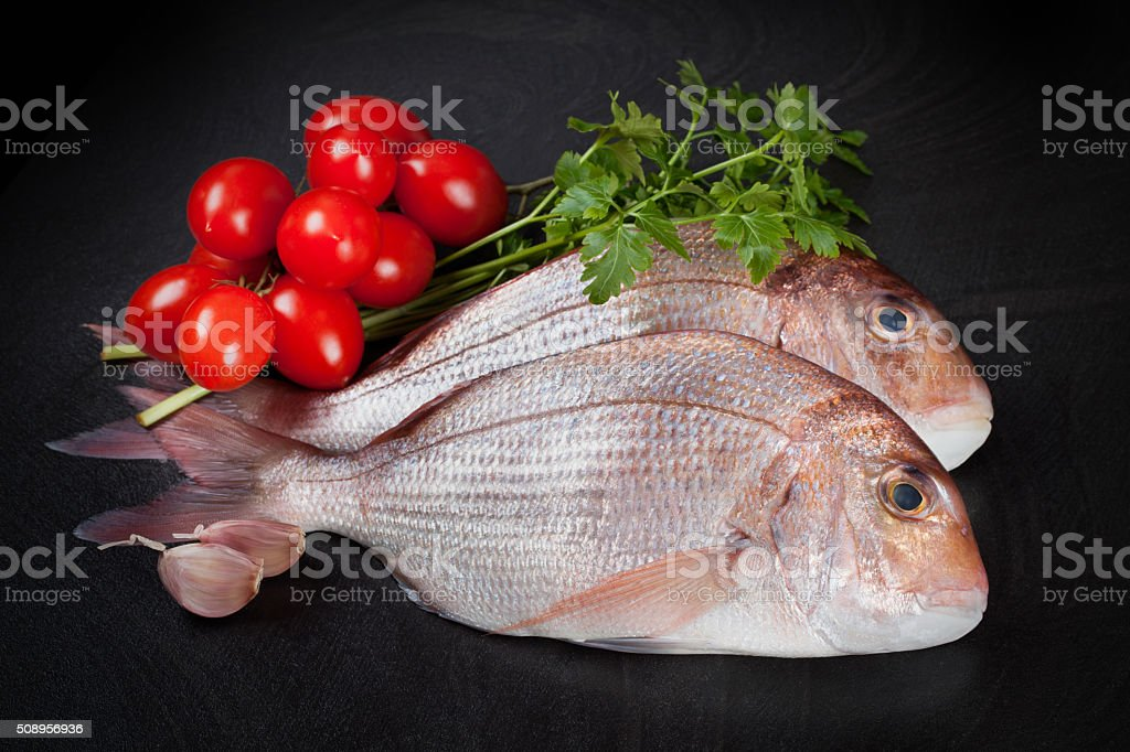 Dentex Fish stock photo