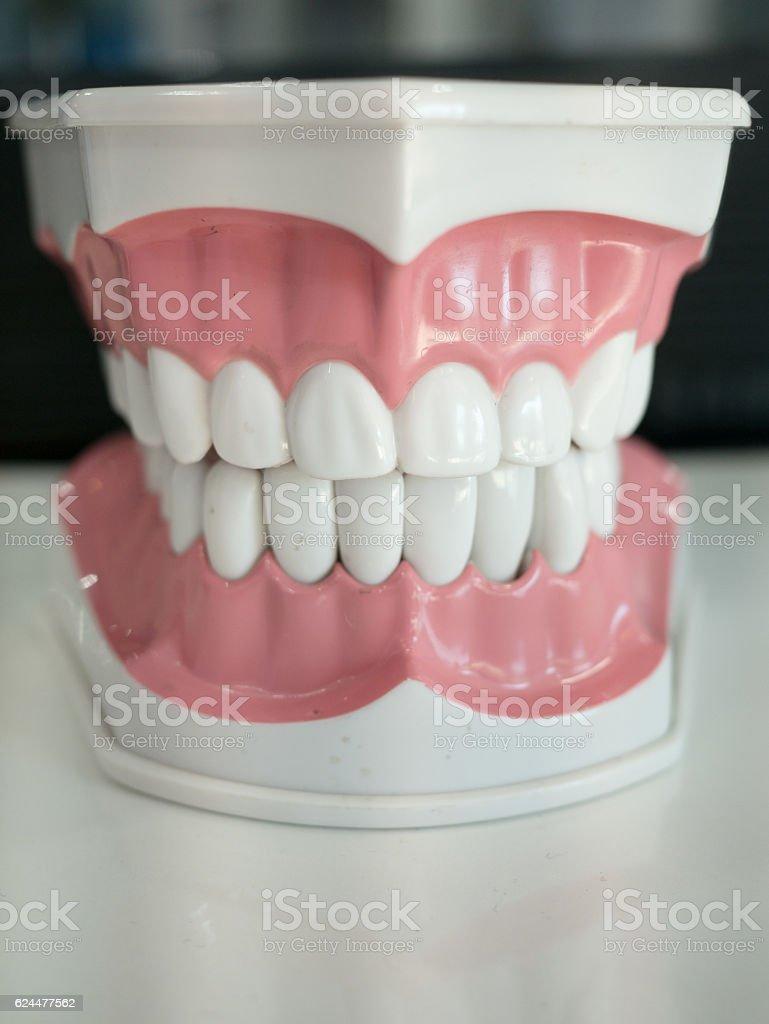 Dential model of  white teeth stock photo
