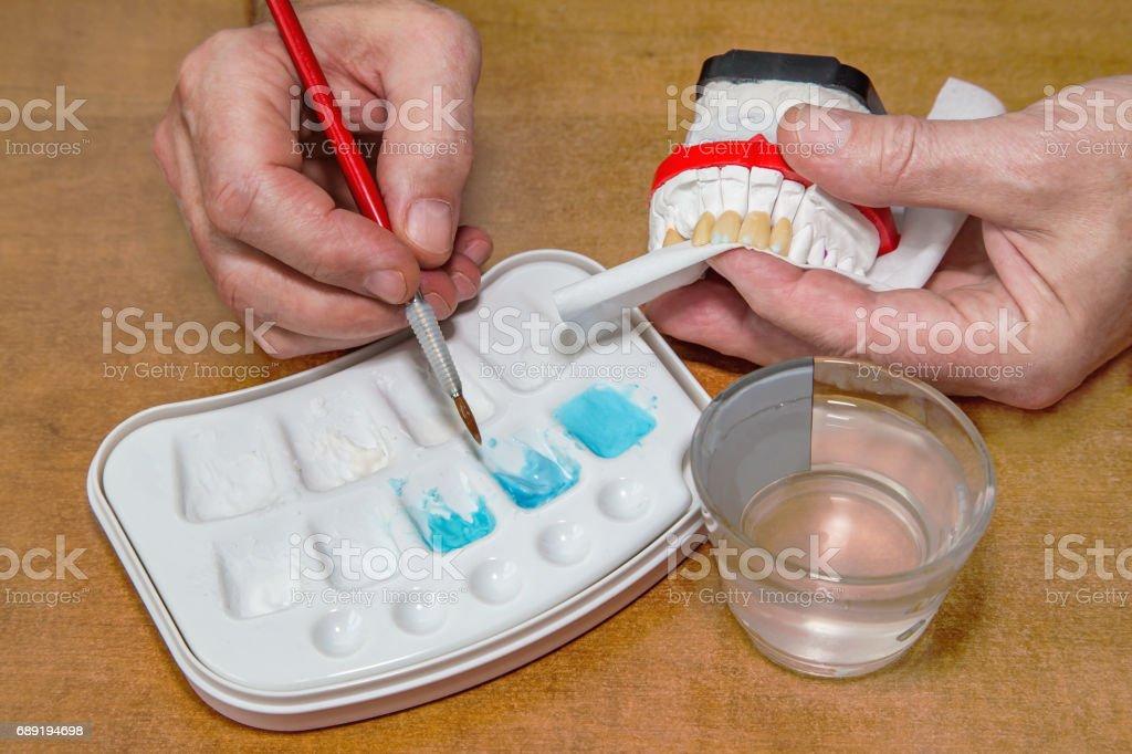 Dentist hands with brush working on ceramic dental model stock photo