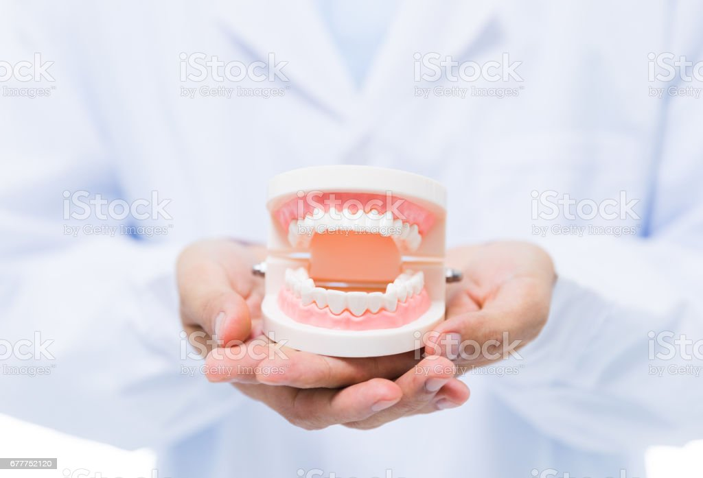 Dentist holding denture stock photo