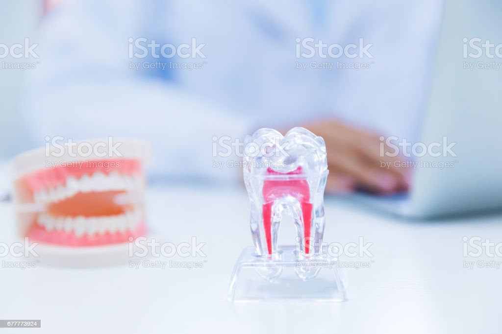 Dentist working with laptop royalty-free stock photo