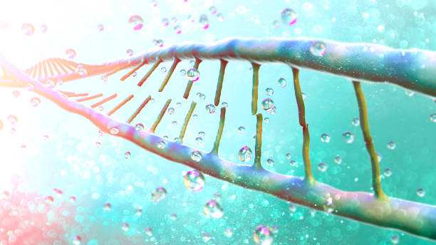 dna, deoxyribonucleic acid is a thread-like chain of nucleotides carrying the genetic instructions used in the growth, development, functioning and reproduction. dna helix - rna foto e immagini stock