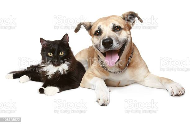 Depiction of a cat and dog laying together picture id106528522?b=1&k=6&m=106528522&s=612x612&h= m1bkxninh3bbf flu7kar1r6ml0trgvlso3kav91mk=