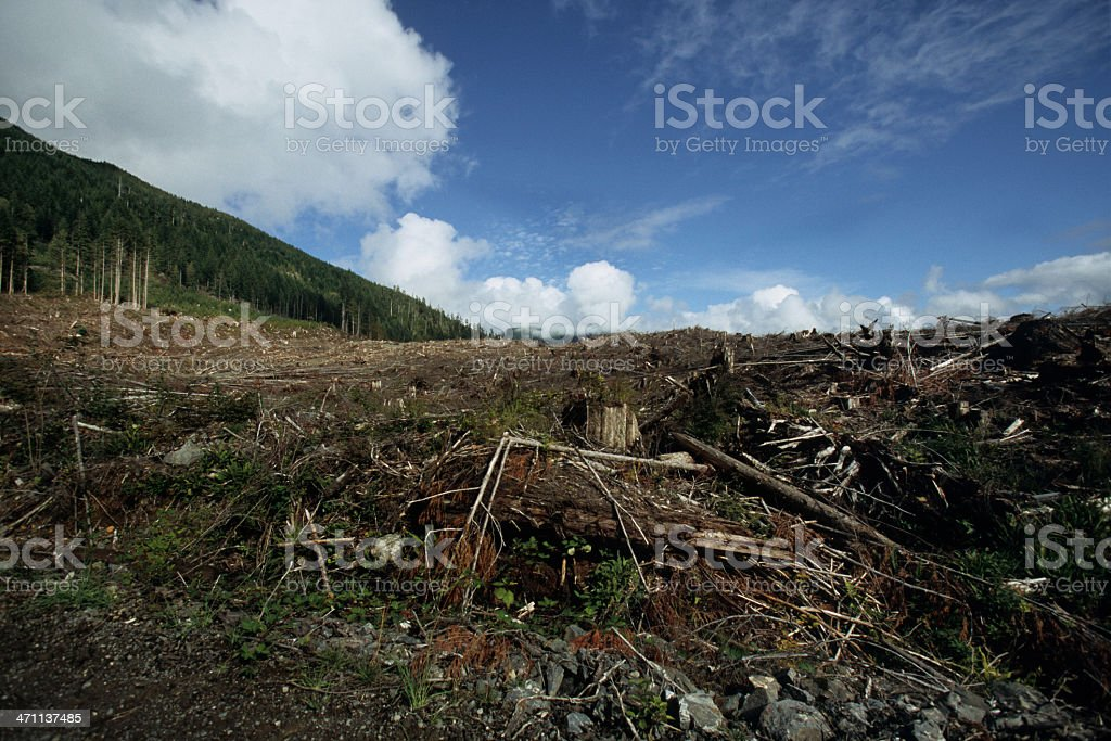 Depleting forest royalty-free stock photo