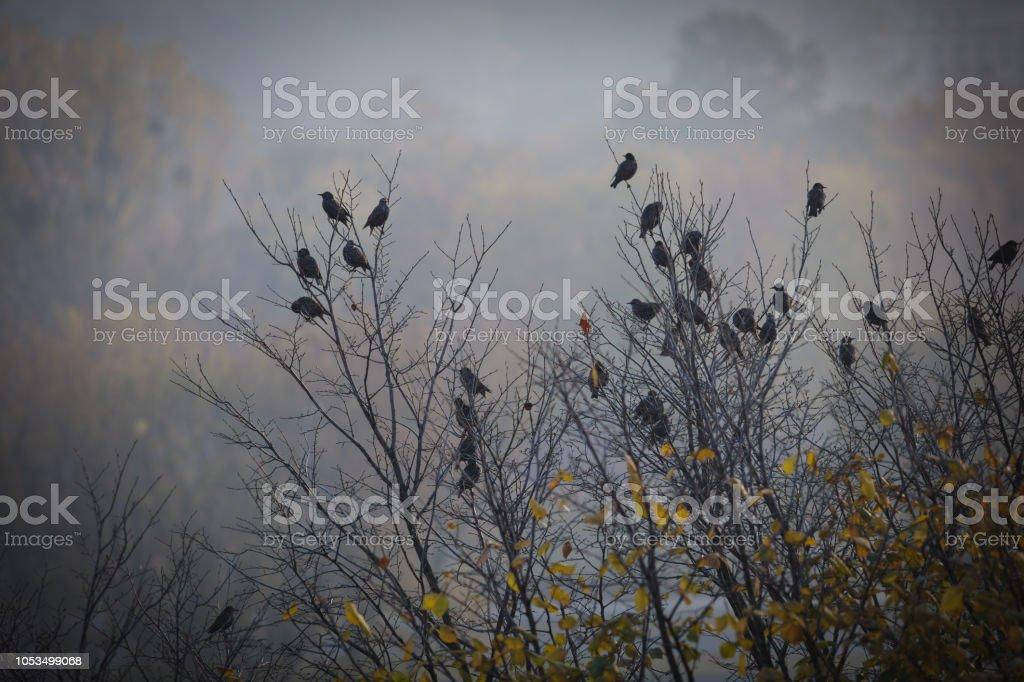 Depressive autumn landscape, sad birds sitting on a tree, dark image with vignette stock photo