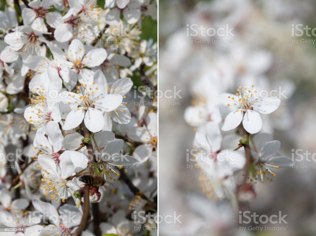depth of field, comparison of two photos stock photo