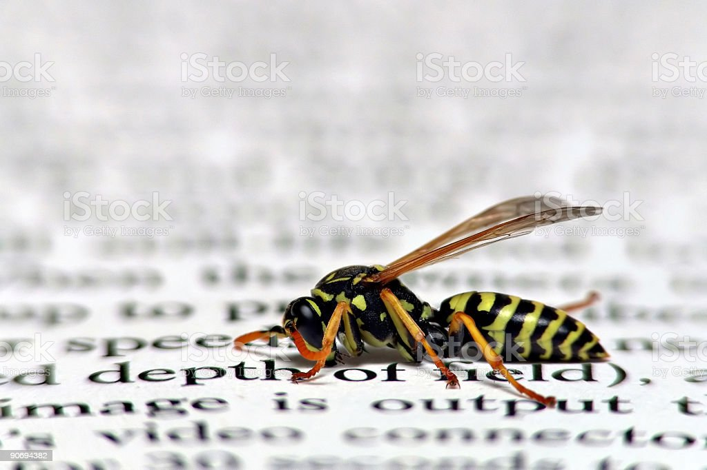 depth of field with wasp royalty-free stock photo