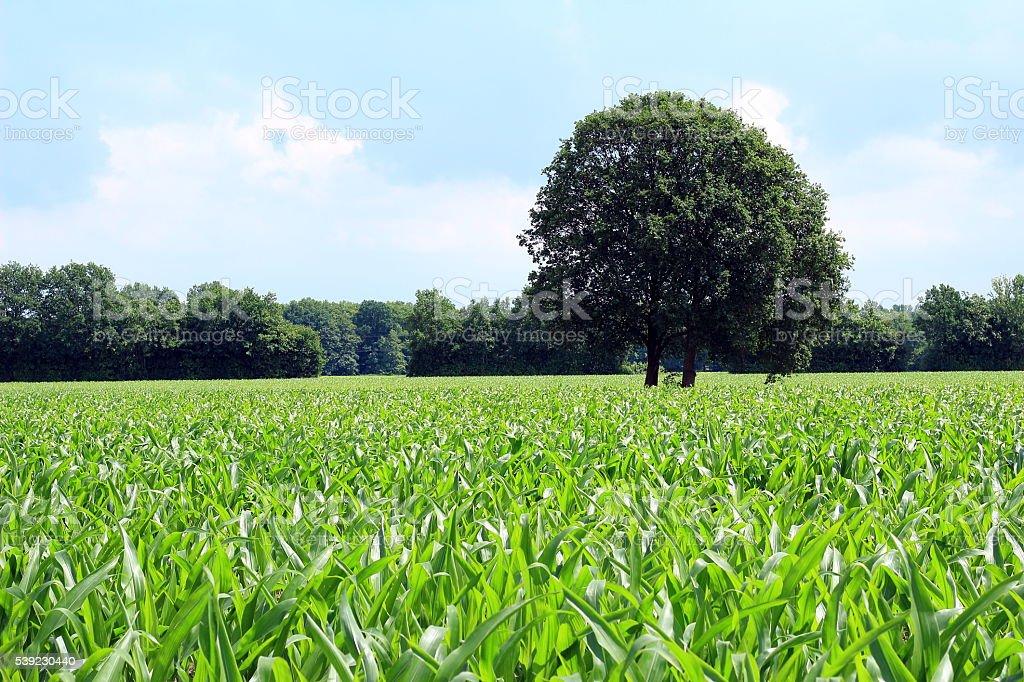 Der Baum  foto de stock libre de derechos