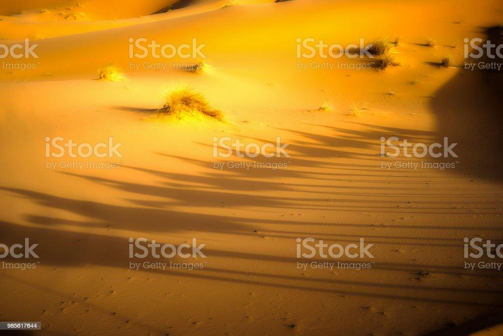 Der Kamel-Flüsterer – Foto