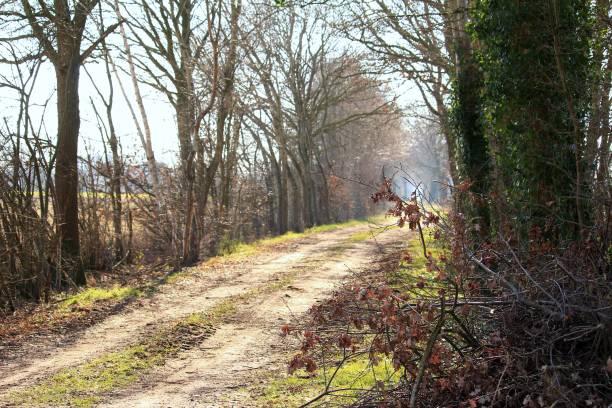 Der Weg ist das Ziel Feldweg im Sonnenschein ziel stock pictures, royalty-free photos & images