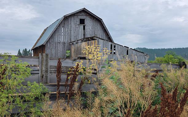 Derelict wooden barn, Montana, USA. stock photo
