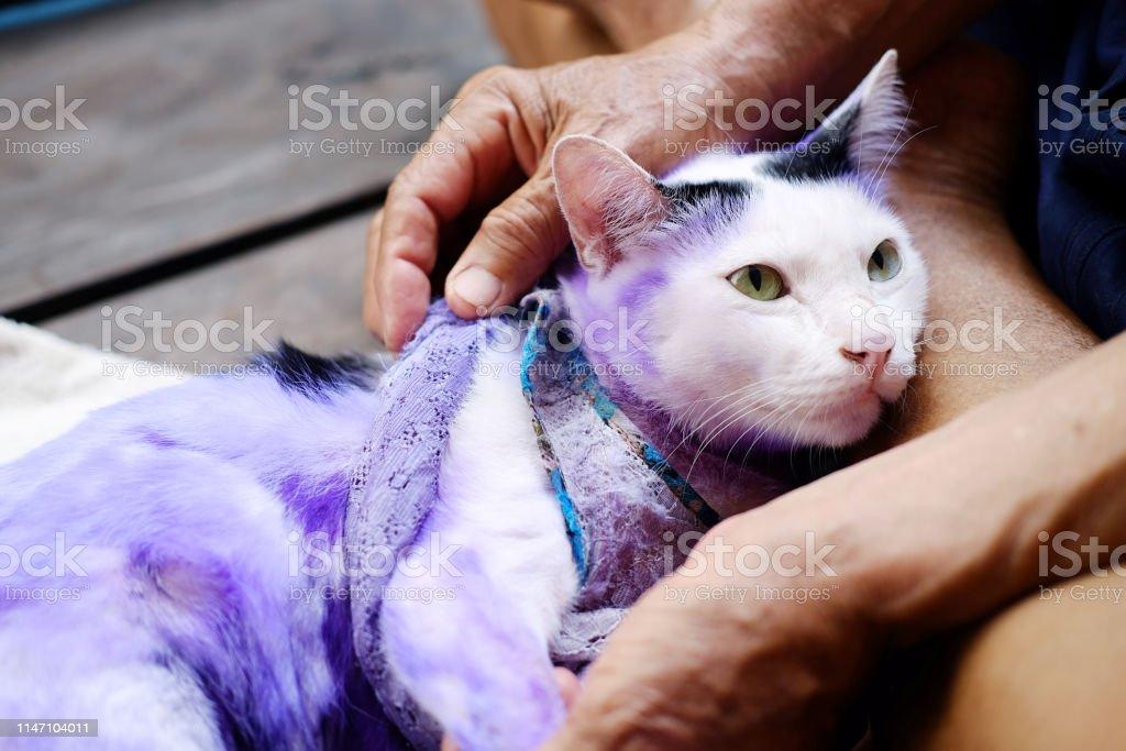 gusanos en la piel del gato