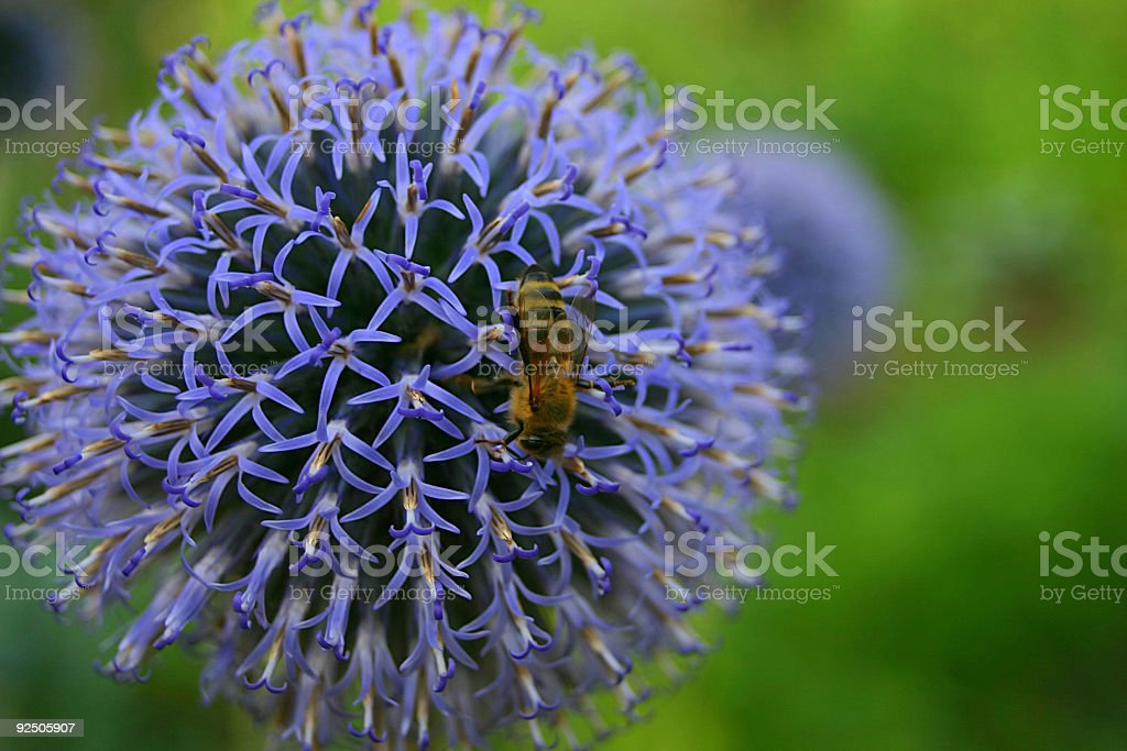 Descending bee royalty-free stock photo