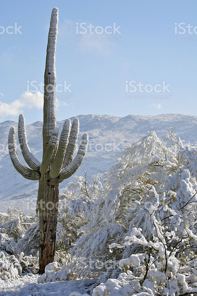 Desert and Cactus in the Snow royalty-free stock photo