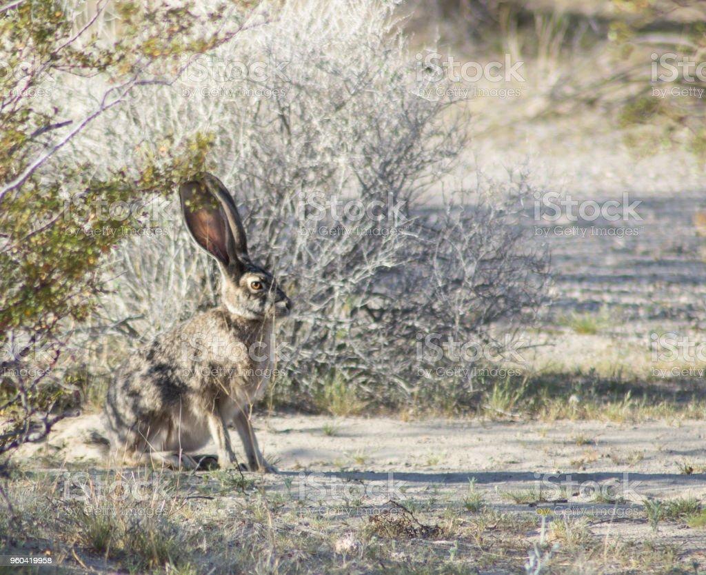 Collection Mojave Desert Animals Pictures - Sabadaphnecottage