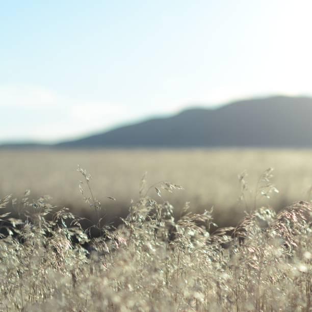 wüstenaurum lumin nation - aurum stock-fotos und bilder
