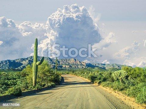 Sonora Desert backcountry in monsoon season. Southern Arizona, American Southwest.
