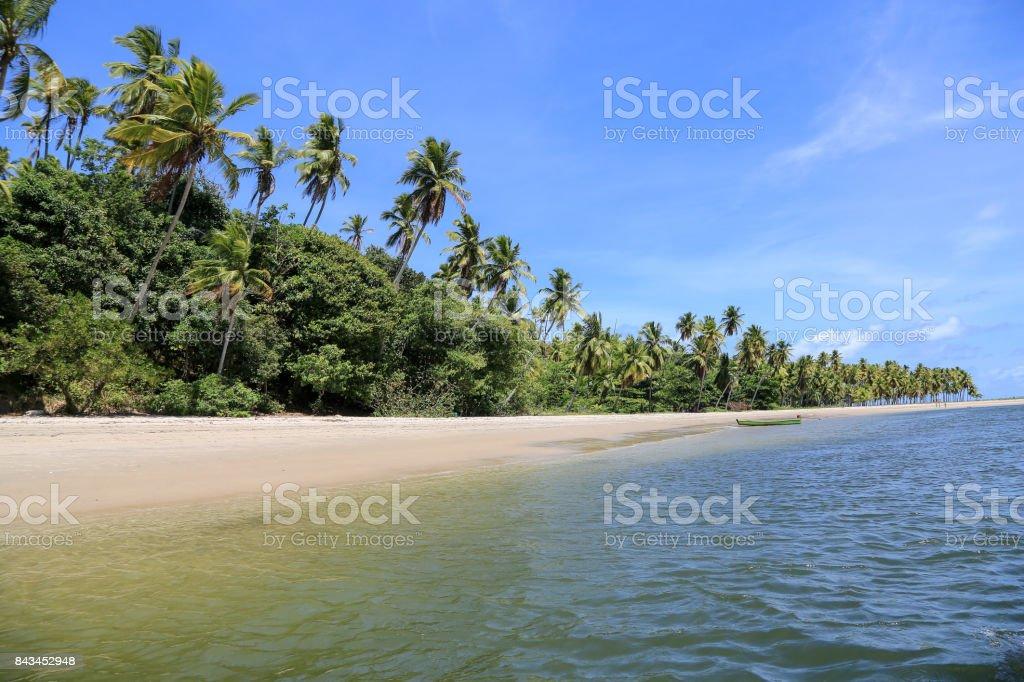 Desert beach in Brazil stock photo