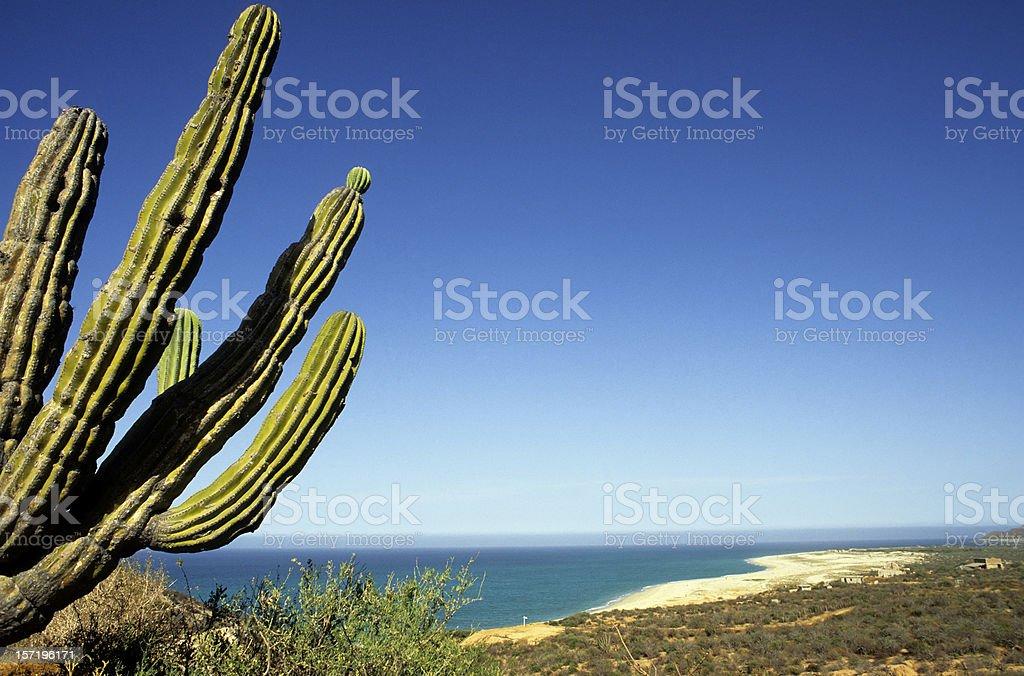 Desert Beach – Foto